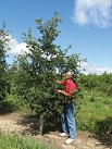 These are the same Genetically Superior grafted trees we sell bareroot in large quantities for Investment Timber except they are grown taller (larger) and sold in containers more convenient for landscaping purposes.